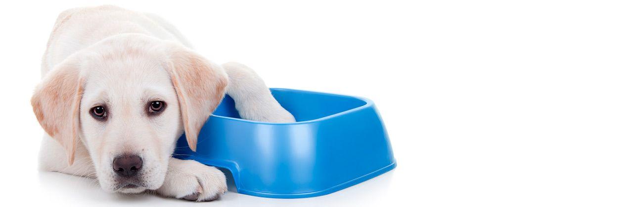 Nutrición, alimentación y dietas para mascotas