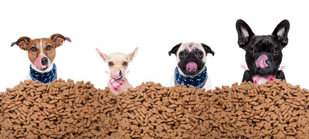 Asesoramiento nutricional para mascotas