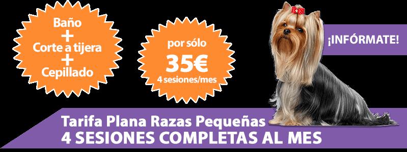 Tarifa plana de peluquería canina en Málaga